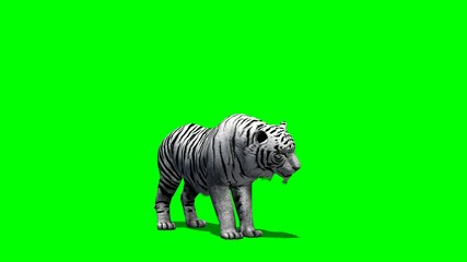 white Tiger eats - green screen