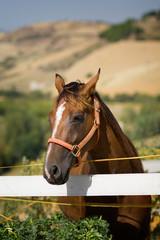 Ritratto di cavallo dentro a recinto
