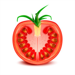 A slice of tomato vector