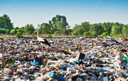stork on the dump - 66052967