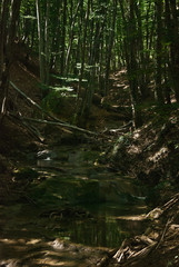 river Sary-Uzeni
