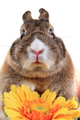 small brown bunny (pet) with yellow flower
