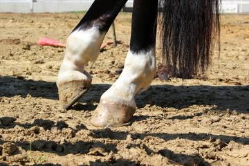 Die Hinterhufe eines Pferdes auf Sandboden beim Dressurreiten
