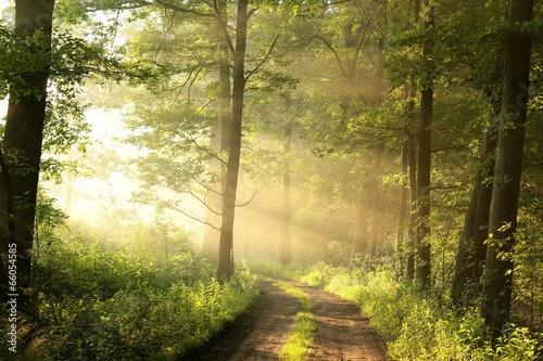 Keuken foto achterwand Bossen Dirt road through the spring deciduous forest on a foggy morning