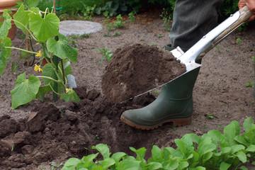 Gärtner gräbt Gemüsebeet um
