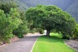 Path in Kirstenbosch National Botanical Garden poster