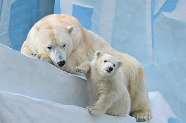 Медведица с медвежонком.