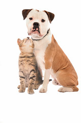 A kitten and dog on white