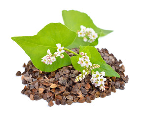 Buckwheat with flowers isolated.