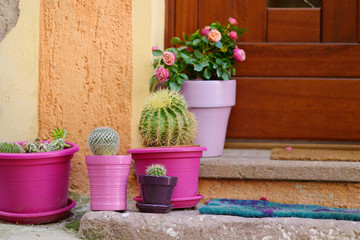 Cactuses in colorful pots by a doorstep