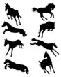 Black silhouettes of horses in jumping, vector
