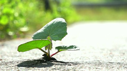 plant sprouted through the asphalt