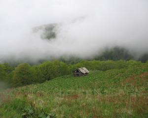 Деревянный домик в густом тумане в горах Карпат