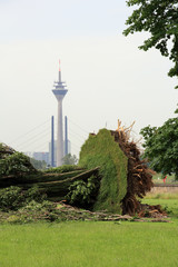 uprooted trees in Düsseldorf after a heavy storm