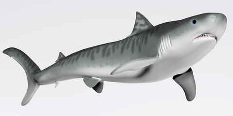 Tiger Shark Profile