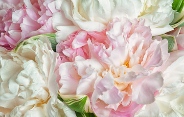 Blooming peonies