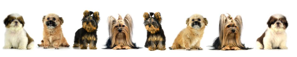 The Dog puppy
