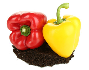 Red and yellow pepper with ground isolated on white