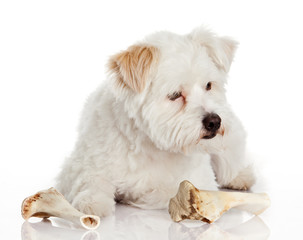 dog with bone isolated on white background