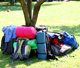 backpacks of Boy Scouts around the tree during an excursion 2