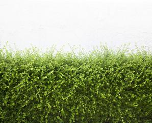 Bushes fence leaves