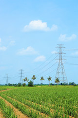 High voltage power lines in corn field