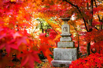 The fall season of Japan for adv or others purpose use