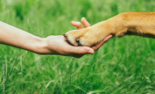Aluminium Ontspanning Dog paw and human hand are doing handshake
