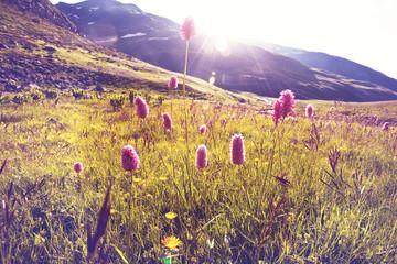 fototapeta góry łąka