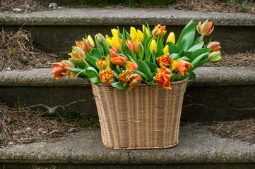 Basket with tulips on stairs