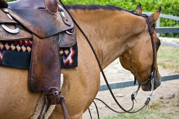 horse with western saddle