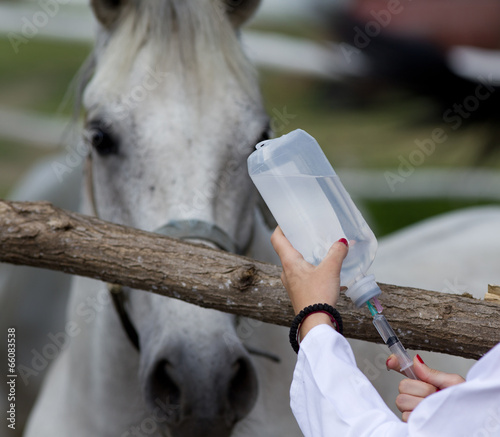 Fotobehang Paarden Horse injection