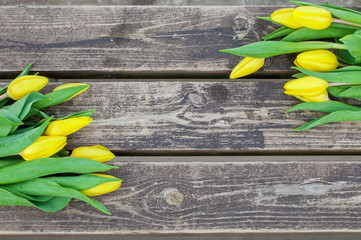 Fresh yellow tulips on wooden background