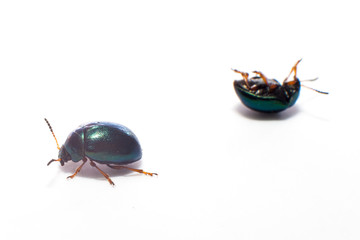 Isolated beetles