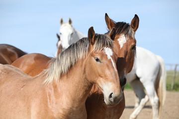 Nice draft horses looking at you
