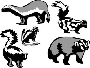 badger and skunk