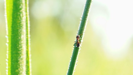 Ant climbing on blade of grass