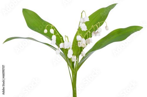 Poster Lelietje van dalen Convallaria majalis flowers