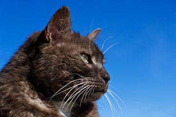 Katzenporträt vor blauem Himmel