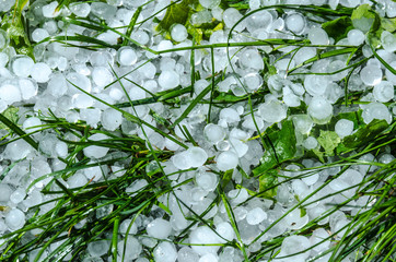 Hail ice balls in grass after a heavy rain