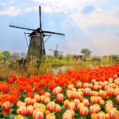 Classic Dutch windmills, tulips and sunbeams, Netherlands