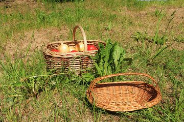 Baskets for vegetables