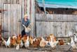 Leinwandbild Motiv chicken farm