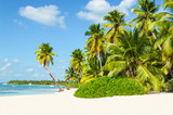 Beautiful tall palm trees and white sandy beach - 66108529