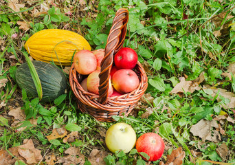 Fresh melons and apples in basket in autumn