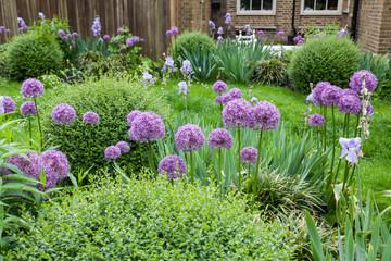 malerischer Garten mit Zierlauch