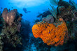 Leinwanddruck Bild - Caribbean Coral Reef 6