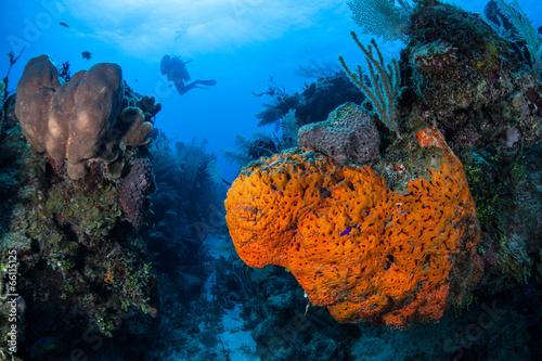 Leinwanddruck Bild Caribbean Coral Reef 6
