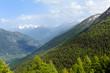 Pinete e conifere in montagna