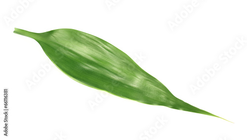 Keuken foto achterwand Palm boom Palm tree leaf isolated